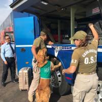 Carabineros detiene a Boliviano por tráfico de drogas.