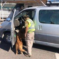 Can de O.S.7 de Carabineros detecta a Boliviano con casi 23 kilos de cocaína.