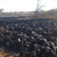 CONAF interpuso querella por incendio forestal de Reserva Nacional Pampa del Tamarugal
