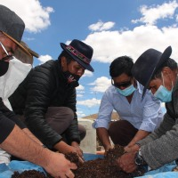 Profesionales de Fomento Productivo del Municipio de Colchane realiza taller de sembrío de capulí en Cariquima