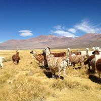 Definen seis ejes clave para instaurar primer Laboratorio Natural para la Agricultura en el Desierto
