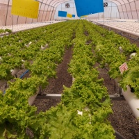 Abordan optimización hídrica para la agricultura en zonas áridas
