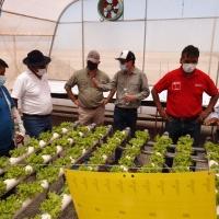 Ponen en marcha trabajo de invernaderos hidropónicos en la comuna de Pozo Almonte