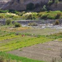 Se inició reconsideración de postulaciones a programa de recuperación de suelos en Tarapacá