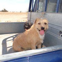 Buscan disminuir impacto de mascotas en la fauna nativa