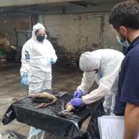 PDI investiga muerte masiva de cormoranes en playa brava